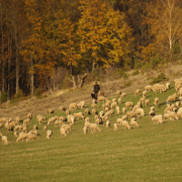 Schäfer mit Herde (c) Andrea Imhäuser
