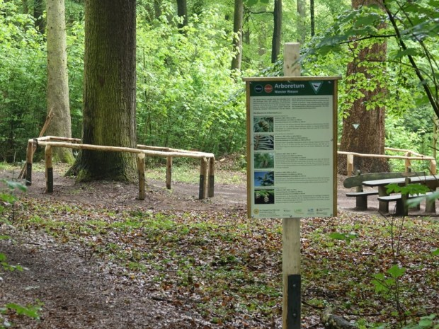Schild Arboretum am P11 c Marco Lenarduzzi 620x465 Premiumweg P11 Niester Riesen