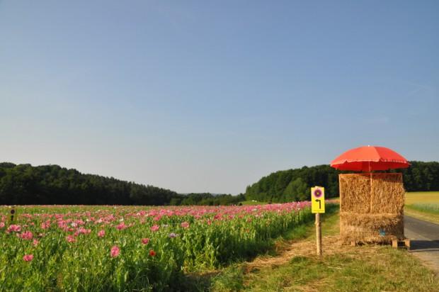 Strohbank im Eistal GrandenborncWerner Mest 620x412 Die erste Mohnblüte Saison in Grandenborn war ein Erfolg