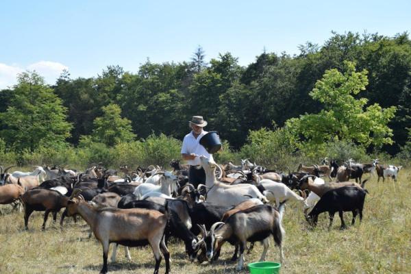 Ziegen Grossert c Susanne Pfingst Artenvielfalt durch Schaf  und Ziegenbeweidung