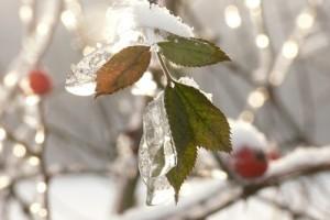 10 01 Habichtswald Schnee (9)
