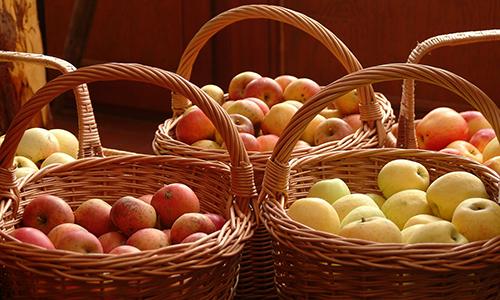 Apfelkörbe 2 17. Hessische Pomologentage in Naumburg