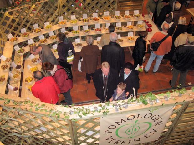 Ausstellungswabe groß 620x465 16. Hessische Pomologentage in Naumburg