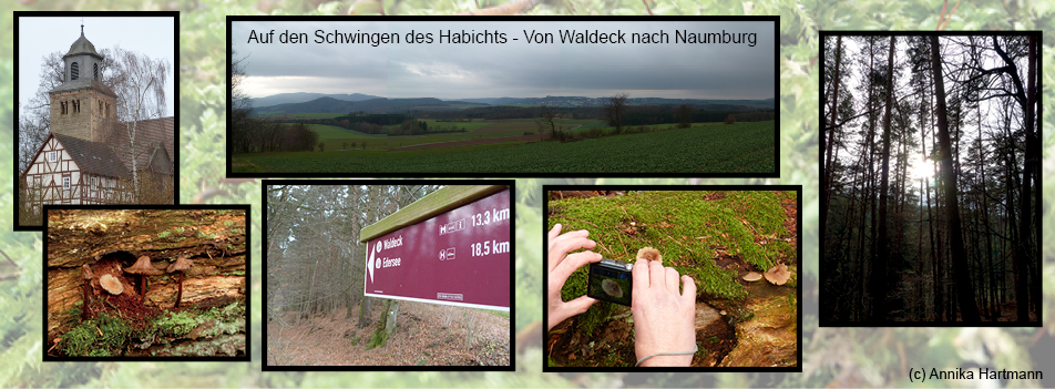 C NaturparkHabichtswald AHartmann 2014  Kollage Fotowanderung Auf den Schwingen des Habichts von Waldeck nach Naumburg   Die Natur durch das Objektiv des Fotoapparates gesehen