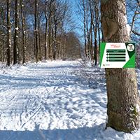 Montage Annika Ludolph Quiz Wanderweg im Hohen Habichtswald