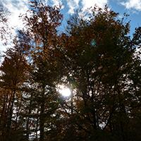 Naturpark Habichtswald_2013_AHartmann_Herbstwald Licht