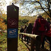 Naturpark Habichtswald 2013 AHartmann Herbstwald HaWaSteig Herbstwanderung durch den Hohen Habichtswald