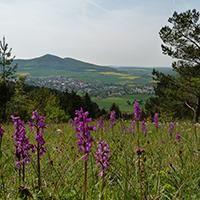 Naturpark Habichtswald_2014_AHartmann_Dörnberg Orchideen