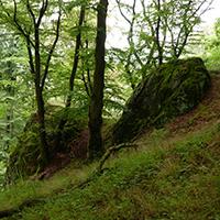 Naturpark Habichtswald 2014 AHartmann Hundsberg Der Hundsberg – eine vom Bergbau geprägte Biosphäre
