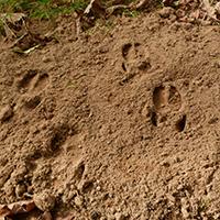 Naturpark Habichtswald 2014 AHartmann Tierspuren Das FFH Gebiet Seilerberg