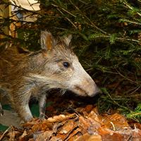 Naturpark Habichtswald_2015_AHartmann_Ausstellung Spuren