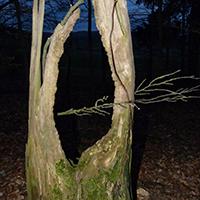 Naturpark Habichtswald 2015 AHartmann Wald Nacht Nachtwanderung bei Vollmond