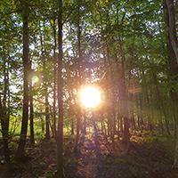 Naturpark Habichtswald_2015_AHartmann_Wald Sonne