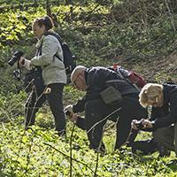 Naturpark Habichtswald 2015 HSiebert Fotowanderung Schauenburg Natur sehen   Natur verstehen   Natur fotografieren