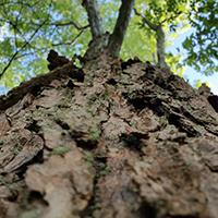 Naturpark Habichtswald_2015_Pixabay_Baumstamm