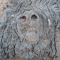 Naturpark Habichtswald_2015_Pixabay_Baumwesen