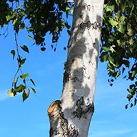 Naturpark Habichtswald_2015_Pixabay_Birke