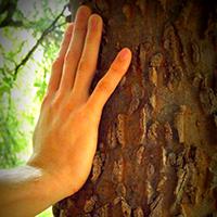 Naturpark Habichtswald_2015_Pixabay_Hand am Baum