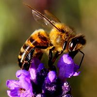 Naturpark Habichtswald_2017_Pixabay_Biene