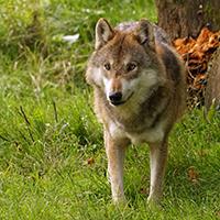 Naturpark Habichtswald_2017_Pixabay_Wolf