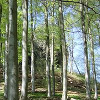 Naturpark Habichtswald_2019_Hohlestein