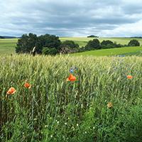 Naturpark Habichtswald 2019 Katja Klages Pflanzen Pflanzen mit allen Sinnen erfahren