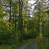 Naturpark Habichtswald 2019 Ludwig Karner Wald mit Weg Waldbaden – Kraft und Energie durch Bäume