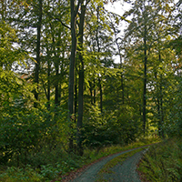 Naturpark Habichtswald_2019_Ludwig Karner_Wald mit Weg