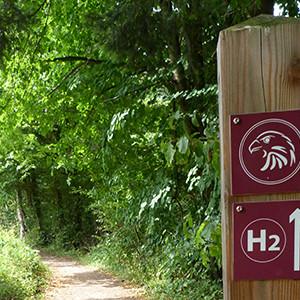 """Naturpark Habichtswald AHartmann 2013 Alpenpfad H2 e1562839484738 Ein """"Naturpark Klassiker""""! Von Kassel über den Hohen Dörnberg nach Zierenberg"""