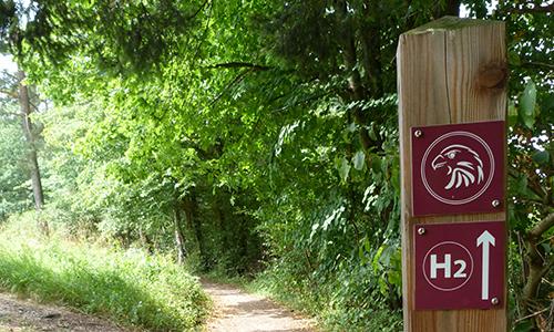 Naturpark Habichtswald AHartmann 2013 Alpenpfad H2 Von der Alm in den Wald
