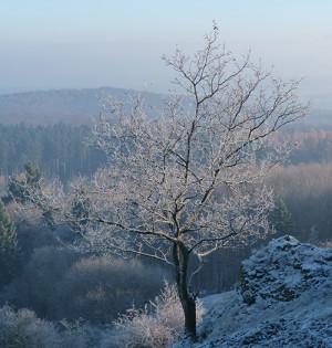 Naturpark Habichtswald AHartmann 2013 Baum im Winter 300x315 Dornröschenschlaf   Bäume im Winter