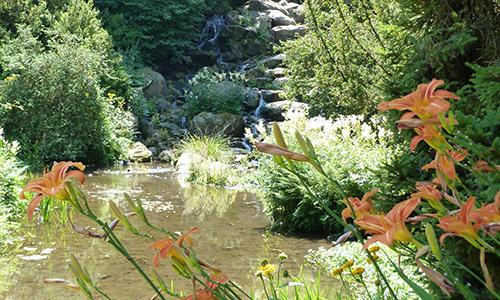 Naturpark Habichtswald AHartmann 2013 Bergpark Blumen Botanische Kostbarkeiten im Bergpark Wilhelmshöhe