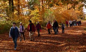 Naturpark Habichtswald_AHartmann_2013_Herbstwandern