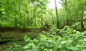 Naturpark Habichtswald_AHartmann_2013_Wald