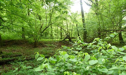 Naturpark Habichtswald AHartmann 2013 Wald Achtsamkeitswanderung am Erlenloch