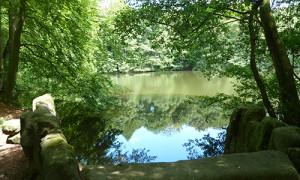 Naturpark Habichtswald_AHartmann_2014_Asch