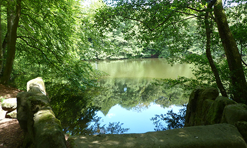 Naturpark Habichtswald AHartmann 2014 Asch Achtsamkeitswanderung im Bergpark Wilhelmshöhe