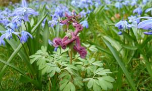 Naturpark Habichtswald_AHartmann_2014_Frühlingsblumen