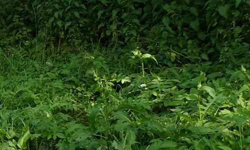Naturpark Habichtswald AHartmann 2014 Kräuterwanderung Botanischer Abendspaziergang: Heilkräuter am Flughafen Calden