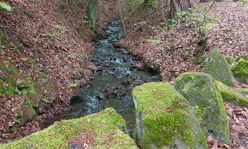 Naturpark Habichtswald AHartmann 2014 Wasser Bergpark Das Wasser in der Natur und der Mensch