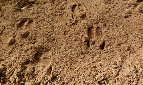Naturpark Habichtswald AHartmann 2014 Wildschweinspuren Auf Spurensuche mit den drei ???