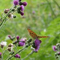 Naturpark Habichtswald ALudolph Schmetterling Alpenpfad Naturpark Leben in der Pandemie