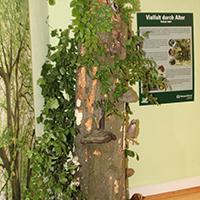 Naturpark Habichtswald Annika Ludolph Ausstellung1 Naturparkzentrum Habichtswald öffnet mit neuer Ausstellung