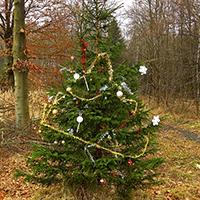 Naturpark Habichtswald_Annika Ludolph_Weihanchtsbauml