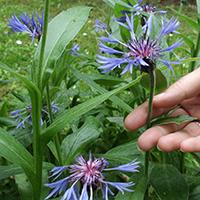 Naturpark Habichtswald CThöne Pflanzen mit allen Sinnen Pflanzen mit allen Sinnen erfahren