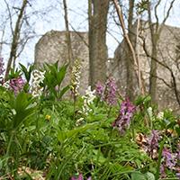 Naturpark Habichtswald_CThöne_Weidelsburg Frühling