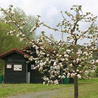 Naturpark Habichtswald_Claudia Thöne_HummelwerkstattObstblüte