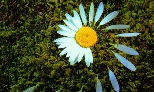 Naturpark Habichtswald DHaas LandArt LandArt : gestalten in der Natur   gestalten mit der Natur