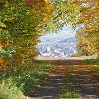 Naturpark Habichtswald_Herbstwald