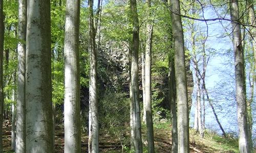 Naturpark Habichtswald Hohlestein Buchenaustrieb von oben   geheimnisvoller Hohlestein